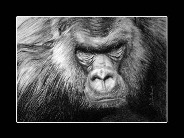 Gorilla gorilla opera d 39 arte di ddn for Camere albergo dwg