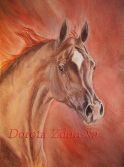 """Desert Rose""- cavallo arabo"