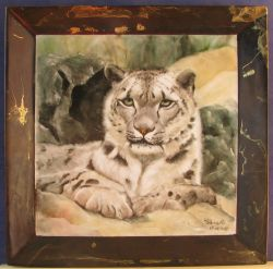 Leopardo delle nevi - Save the Snow Leopard & Himalayas!