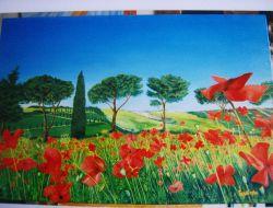 LG 0068 - Campo di papaveri - Toscana