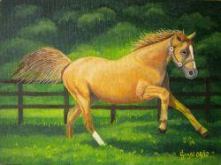 LG 0203 - Kalusha, la cavallina