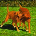 LG 0212 - Lillo e dada, i boxerini