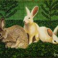 LG 0213 - I coniglietti