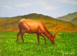LG 0224 - Il cervo solitario
