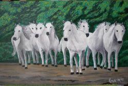 LG 0297 - Cavalli bianchi Camargue