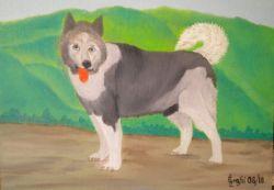 LG 0336 - Il Cane Alaskan Husky