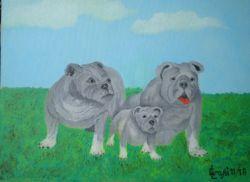 LG 0339 - Il Bulldog Inglese