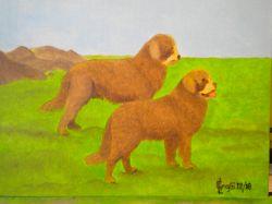LG 0340 - Il Cane Terranova