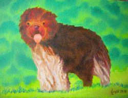 LG 0357 - Il cane Schapendoes