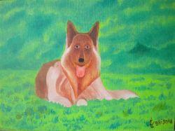 LG 0358 - Il cane Pastore Tedesco