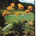 LG 0175 - Scorcio di Calvi - Corsica