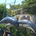I delfini del porto di Cetraro
