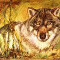 Wolf -  anno 2003