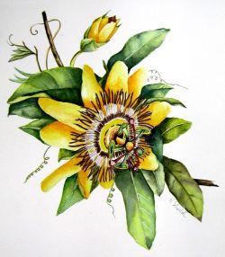 bec196c69 passiflora - Opera d arte di Roberta Vivaldi
