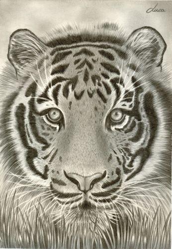 Tigre opera d 39 arte di uca uca for Camere albergo dwg