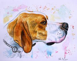 Ritratto cane pointer acquerello